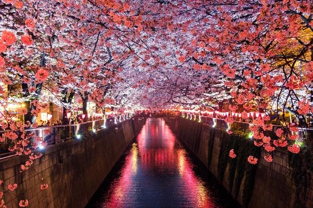 日本の文化を紹介する会を行いながら感じた事・学んだ事